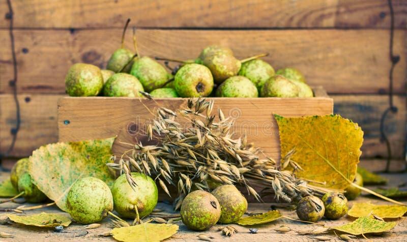 Ακόμα ζωή από τα αχλάδια, το σιτάρι βρωμών, τα κεφάλια και τα φύλλα πτώσης στοκ φωτογραφίες
