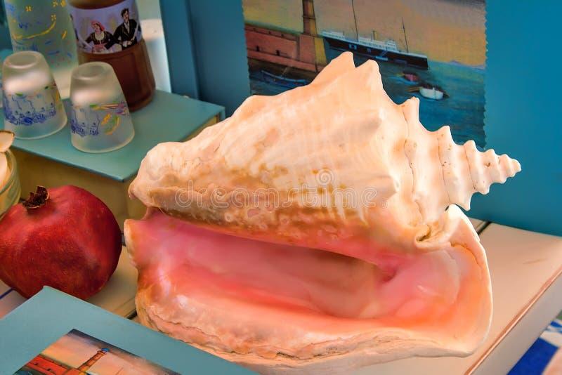 Ακόμα ζωή: κοχύλι θάλασσας, βιβλίο, φρούτα, λουλούδια στοκ φωτογραφίες