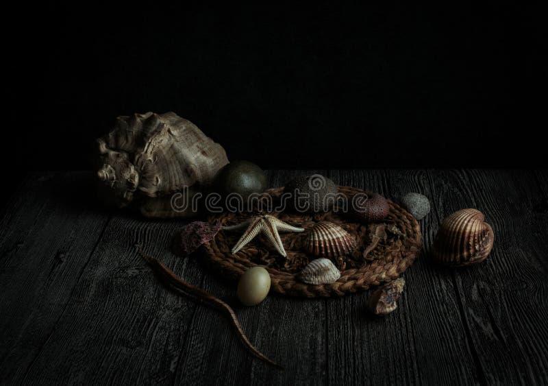 Ακόμα ζωή υποβρύχια στοκ φωτογραφίες με δικαίωμα ελεύθερης χρήσης