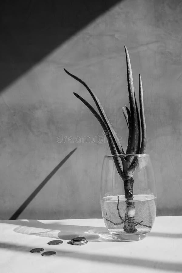 Ακόμα ζωή - Naturaleza Muerta στοκ εικόνα