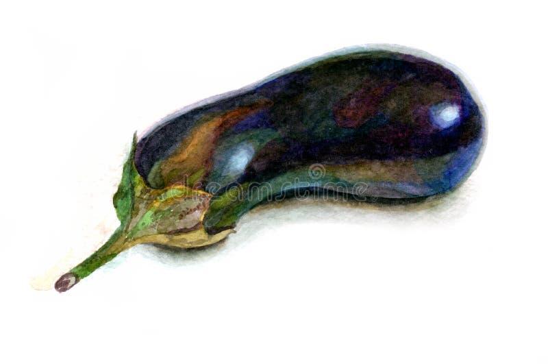 Ακόμα μελιτζάνα watercolor ζωής στο άσπρο υπόβαθρο διανυσματική απεικόνιση