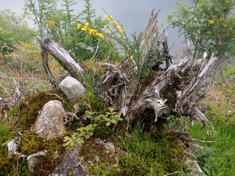 Ακόμη και τα νεκρά δέντρα φαίνονται όμορφα στοκ εικόνες