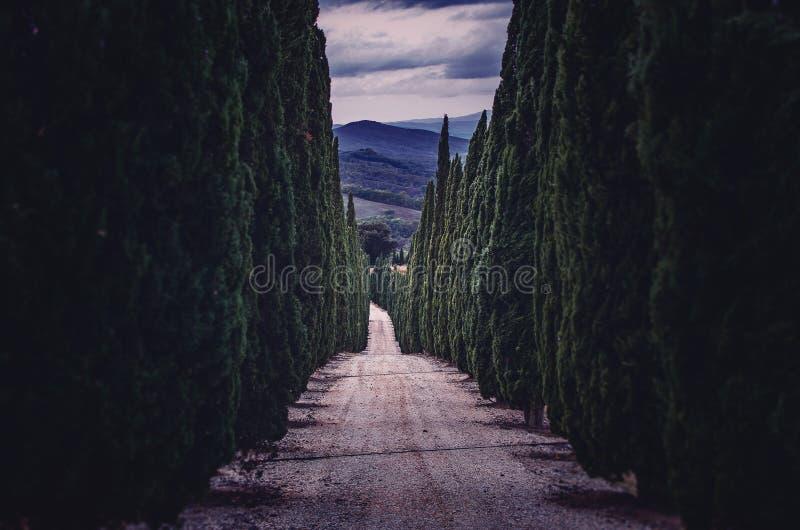 Αλέα με τα κυπαρίσσι-δέντρα στην Τοσκάνη στοκ φωτογραφία