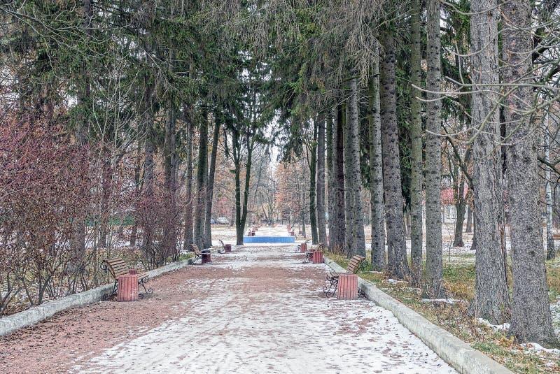Αλέα με τους πάγκους πάρκων στο χιόνι και μια σειρά των ψηλών δέντρων έλατου στοκ φωτογραφία με δικαίωμα ελεύθερης χρήσης
