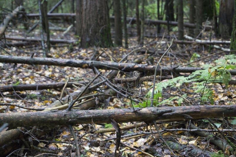 Αλέα πάρκων φθινοπώρου τοπίων φθινοπώρου με τα γυμνά δέντρα και τα ξηρά πεσμένα ζωηρόχρωμα φύλλα στοκ εικόνες