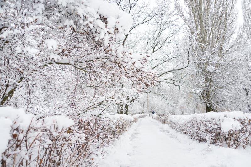 Αλέα σε ένα χιονώδες χειμερινό πάρκο στοκ φωτογραφίες