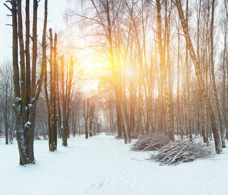 Αλέα των αρχικά διαμορφωμένων δέντρων στοκ εικόνα με δικαίωμα ελεύθερης χρήσης