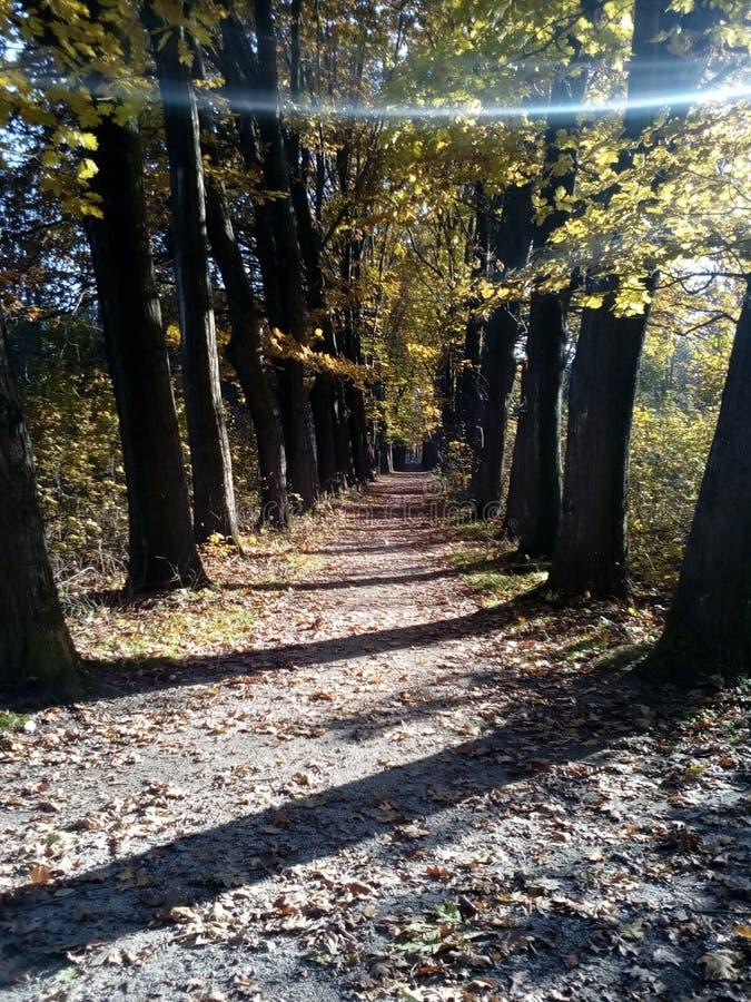 Αλέα φθινοπώρου στην παλαιά αλέα Parkautumn στο παλαιό πάρκο στοκ εικόνα