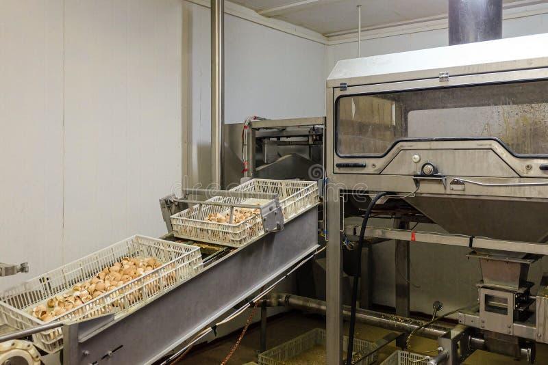 Αλέθοντας εξοπλισμός κοχυλιών αυγών και εκκένωση των κιβωτίων στοκ εικόνες