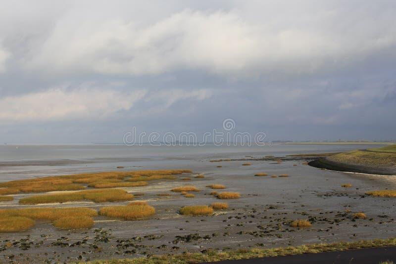 Αλατισμένο έλος με τη χρυσή χλόη κατά μήκος της θάλασσας το χειμώνα στοκ εικόνες