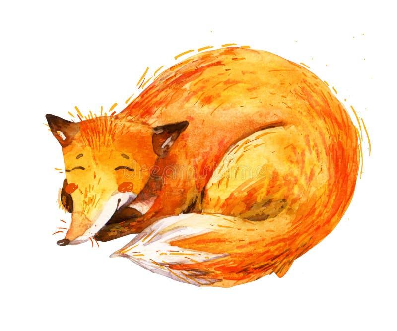 Αλεπού ύπνου Watercolor που απομονώνεται στο άσπρο υπόβαθρο διανυσματική απεικόνιση