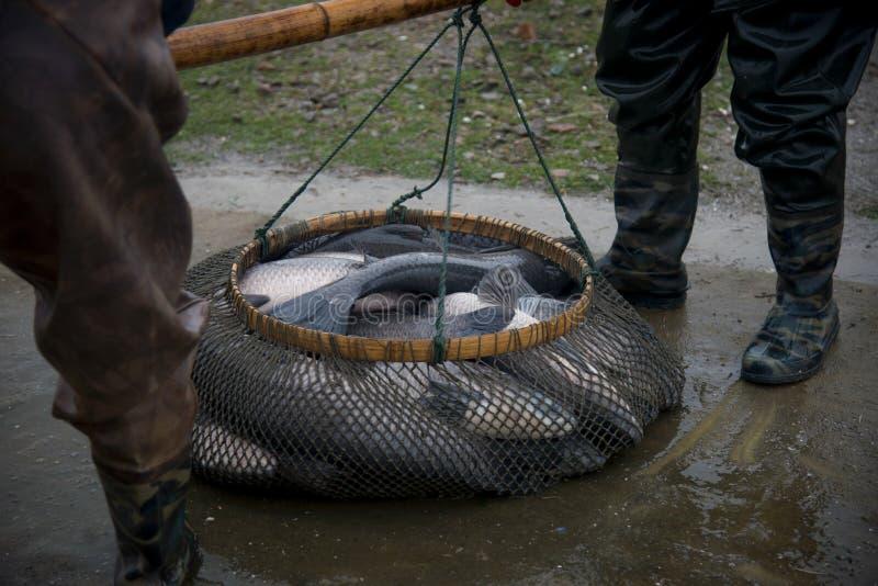 Αλιεία λιμνών ψαριών στοκ εικόνα