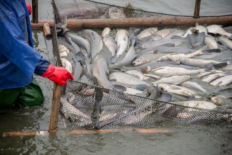 Αλιεία λιμνών ψαριών στοκ εικόνα με δικαίωμα ελεύθερης χρήσης