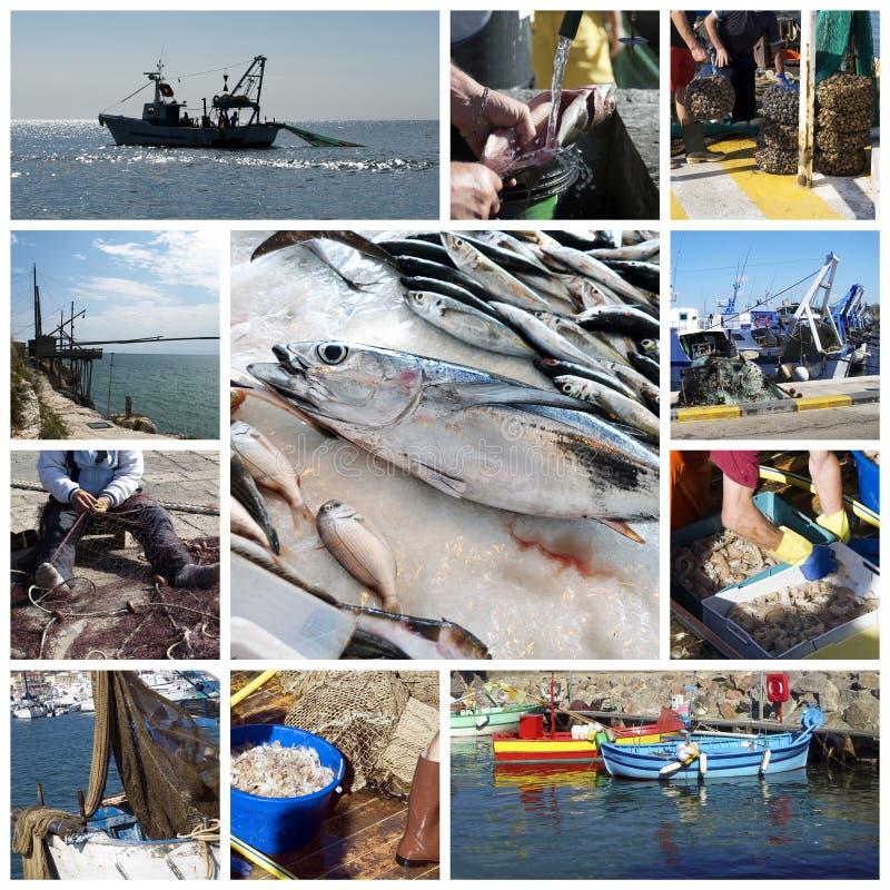 αλιεία ψαριών κολάζ στοκ φωτογραφία