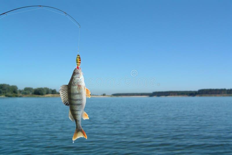 αλιεύοντας ράβδος περκώ&n στοκ εικόνες