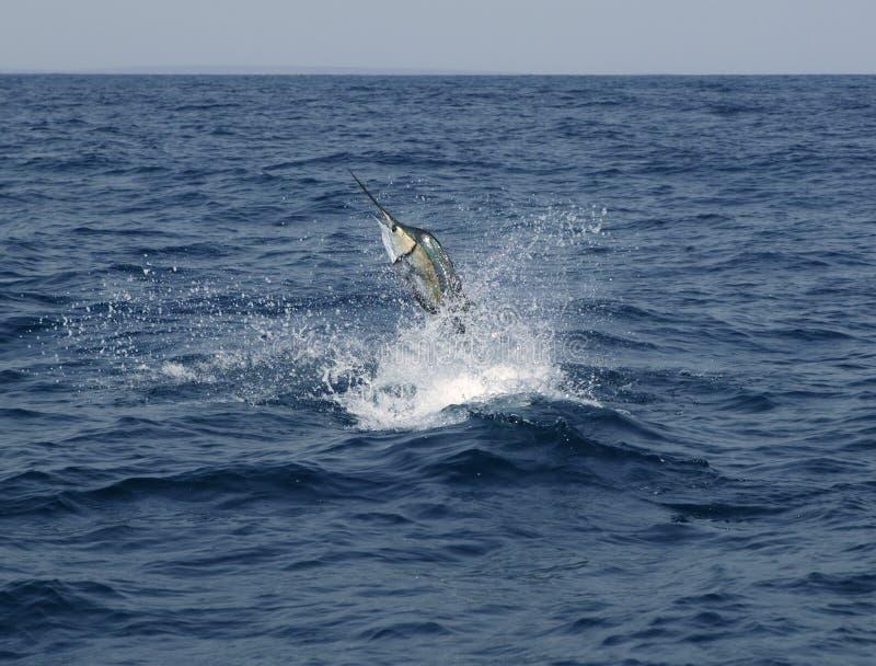 αλιεύοντας sailfish άλματος saltwater &al στοκ εικόνα