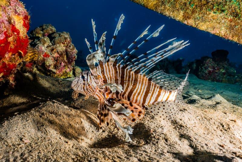αλιεύστε τη Ερυθρά Θάλα&sigma στοκ φωτογραφία με δικαίωμα ελεύθερης χρήσης