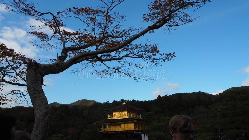 Αλλαγή Ιαπωνία χρώματος φύλλων Kinkakuji στοκ εικόνες