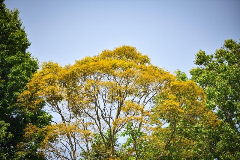 Αλλαγή χρώματος δέντρων φύλλων στοκ εικόνα