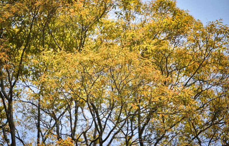 Αλλαγή χρώματος δέντρων φύλλων στοκ φωτογραφίες με δικαίωμα ελεύθερης χρήσης