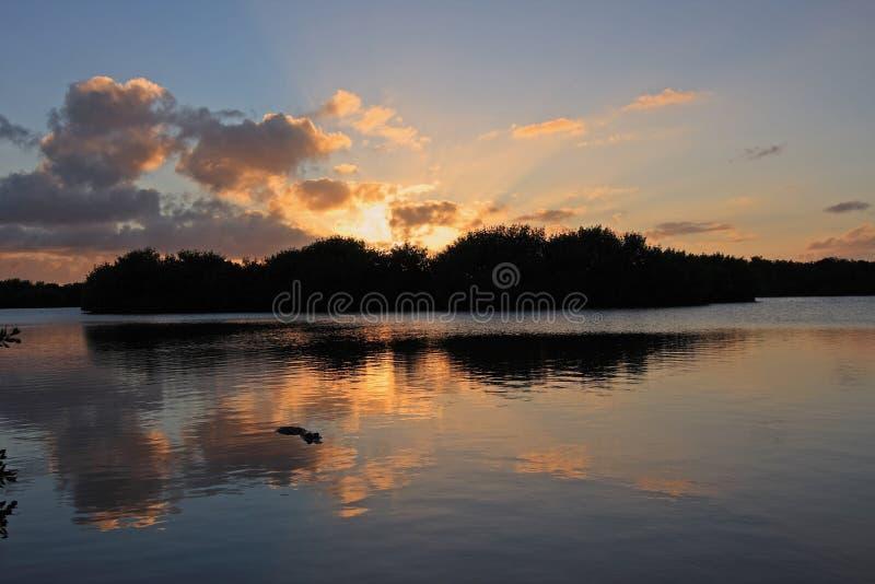Αλλιγάτορας στη λίμνη Paurotus στο εθνικό πάρκο Everglades, Φλώριδα, στο ηλιοβασίλεμα στοκ φωτογραφία με δικαίωμα ελεύθερης χρήσης