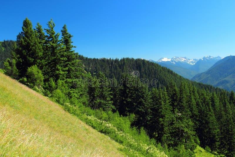 Αλπικά λιβάδια, ειρηνικό τροπικό δάσος, και χιονοσκεπή βουνά στο ολυμπιακό εθνικό πάρκο, Ουάσιγκτον στοκ εικόνα
