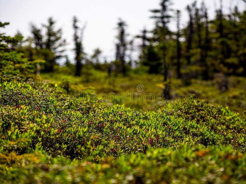 Αλπική έκταση βουνών, σειρά Mahoosuc, Μαίην στοκ φωτογραφίες