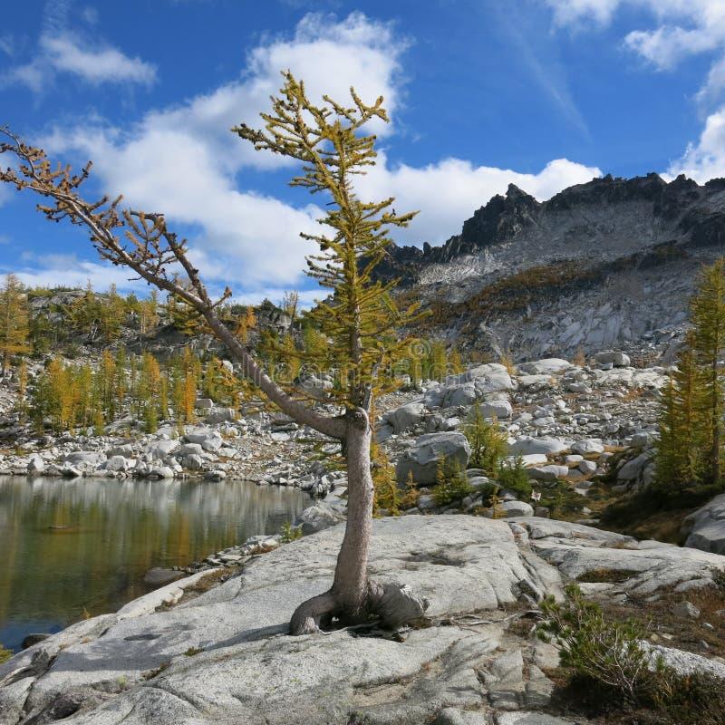 Αλπική περιοχή λιμνών enchantments του πολιτεία της Washington στοκ φωτογραφίες