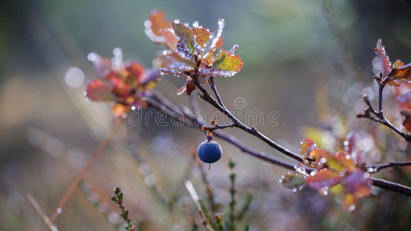 Αλπική χλωρίδα στοκ φωτογραφία με δικαίωμα ελεύθερης χρήσης