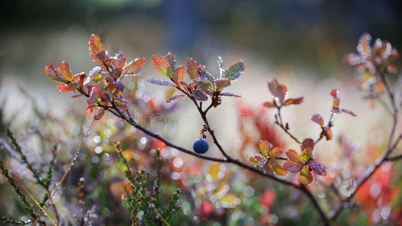 Αλπική χλωρίδα στοκ εικόνα