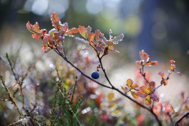 Αλπική χλωρίδα στοκ εικόνες