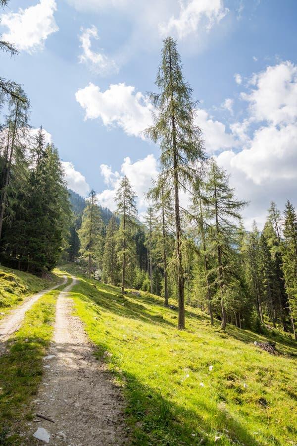 Αλπικό τοπίο: Λιβάδι, δάσος, βουνά και μπλε ουρανός στοκ φωτογραφία με δικαίωμα ελεύθερης χρήσης