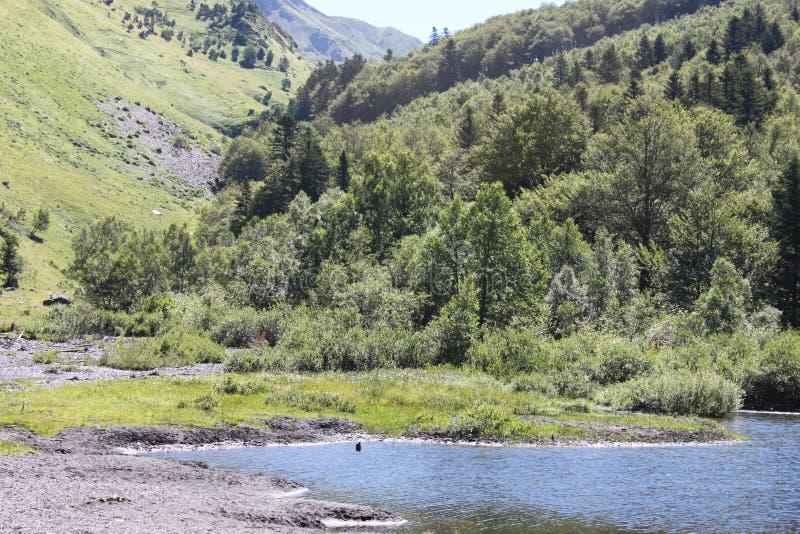 Αλπικό τοπίο μεταξύ των δασών και των βουνών στοκ φωτογραφία με δικαίωμα ελεύθερης χρήσης