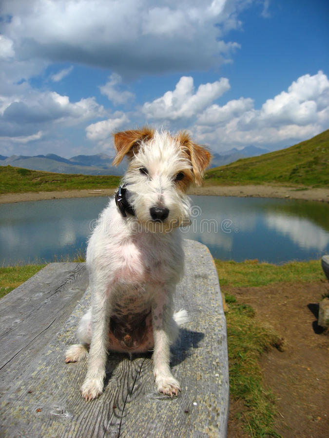 αλπικό τοπίο σκυλιών στοκ εικόνες
