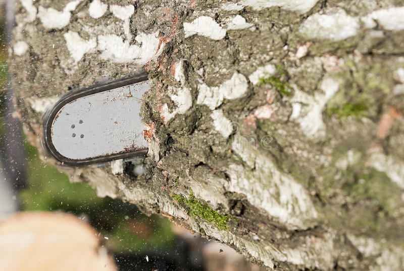 αλυσιδοπρίονο λεπίδων στοκ φωτογραφίες