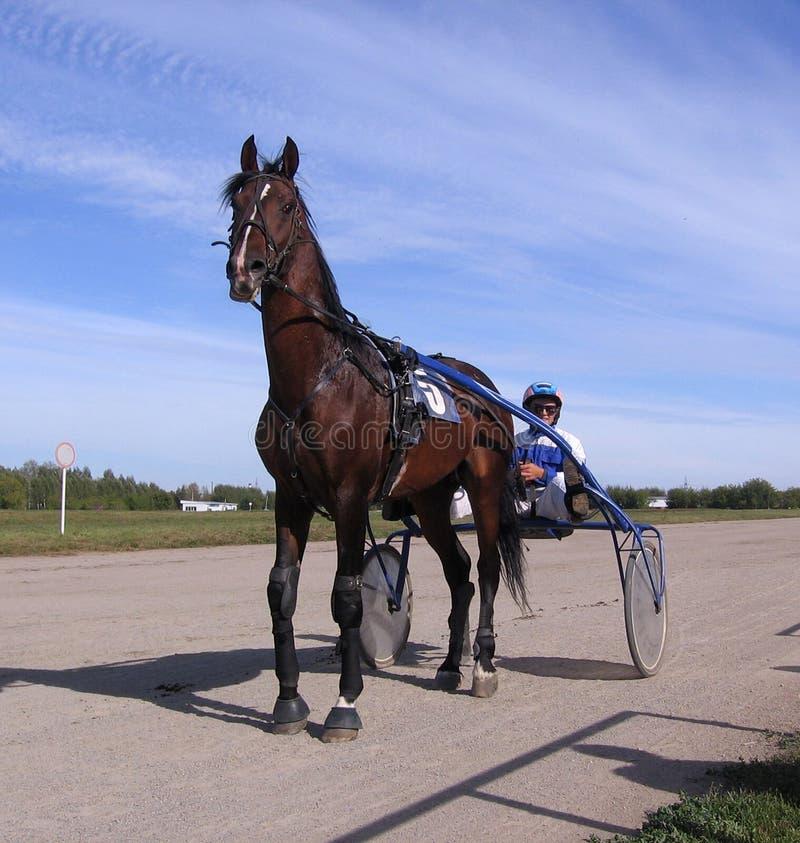 Αλόγων ανταγωνισμών αναπαράγει Racecourse του Novosibirsk τη χρυσή εποχή 2013 Σεπτέμβριος Novosibirsk αρμάτων βραβείων δοκιμής στοκ φωτογραφίες με δικαίωμα ελεύθερης χρήσης