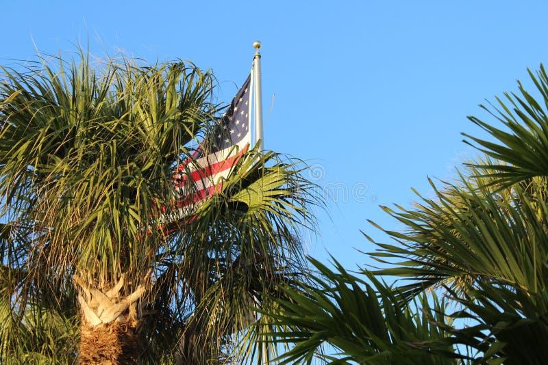 Αμερικανική σημαία με τους φοίνικες στοκ φωτογραφίες με δικαίωμα ελεύθερης χρήσης