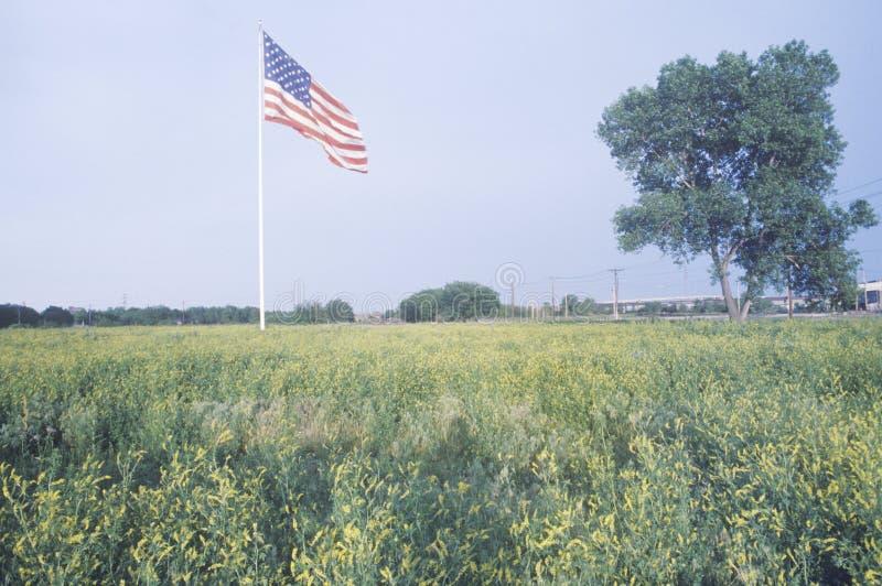 Αμερικανική σημαία στον τομέα Wildflowers, Σαιντ Λούις, Μισσούρι στοκ εικόνες