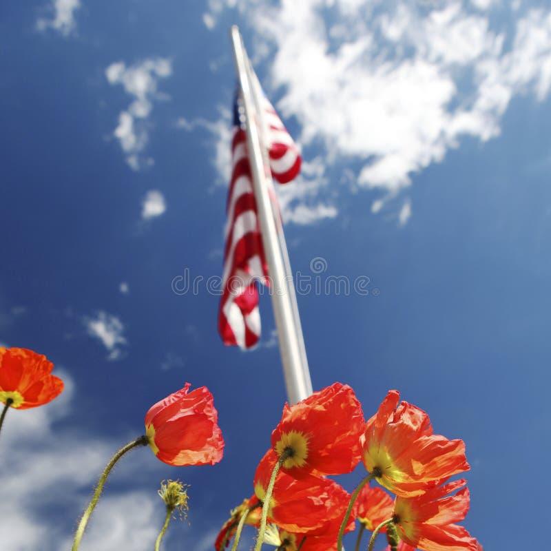 Αμερικανική σημαία στους τομείς παπαρουνών, έννοια ΑΜΕΡΙΚΑΝΙΚΗΣ ημέρας μνήμης στοκ φωτογραφία