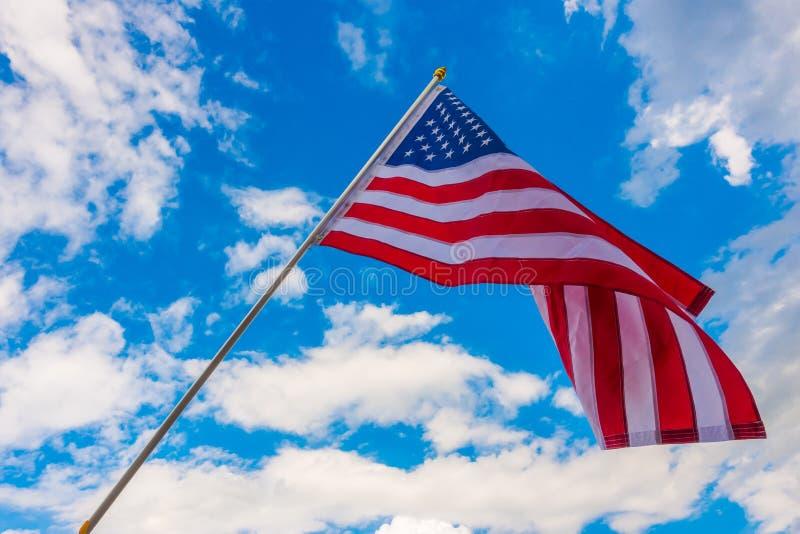 αμερικανικός μπλε ουρα&n στοκ φωτογραφία