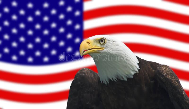 αμερικανικός φαλακρός α&e στοκ εικόνες με δικαίωμα ελεύθερης χρήσης