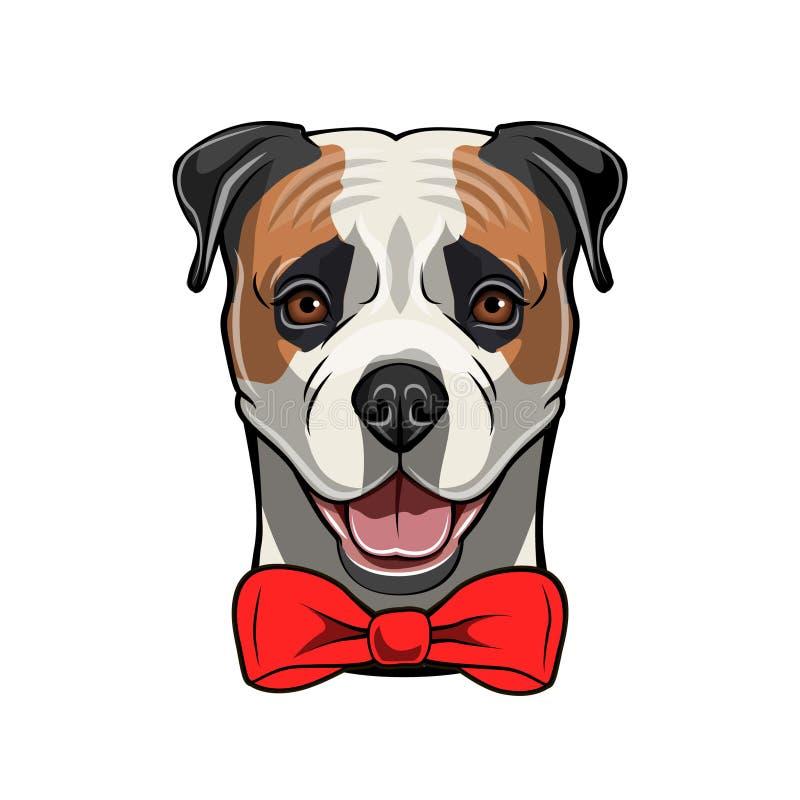 Αμερικανικό μπουλντόγκ, κόκκινο τόξο Χαριτωμένο πορτρέτο προσώπου σκυλιών Φυλή σκυλιών accidence διάνυσμα διανυσματική απεικόνιση