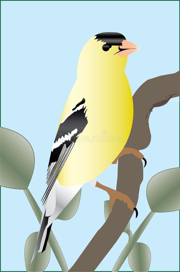 αμερικανικό goldfinch διανυσματική απεικόνιση