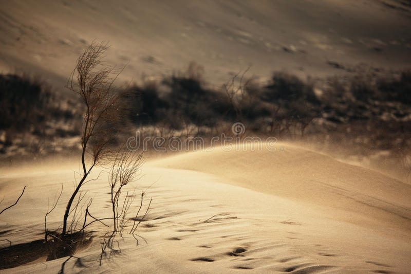 αμμοθύελλα ερήμων στοκ εικόνα