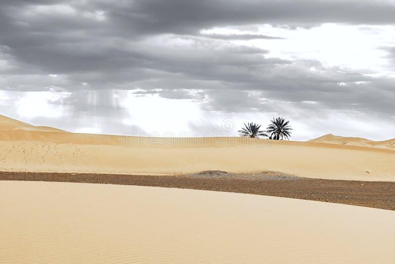 Αμμόλοφοι άμμου και φοίνικας στην έρημο Σαχάρας στοκ εικόνες