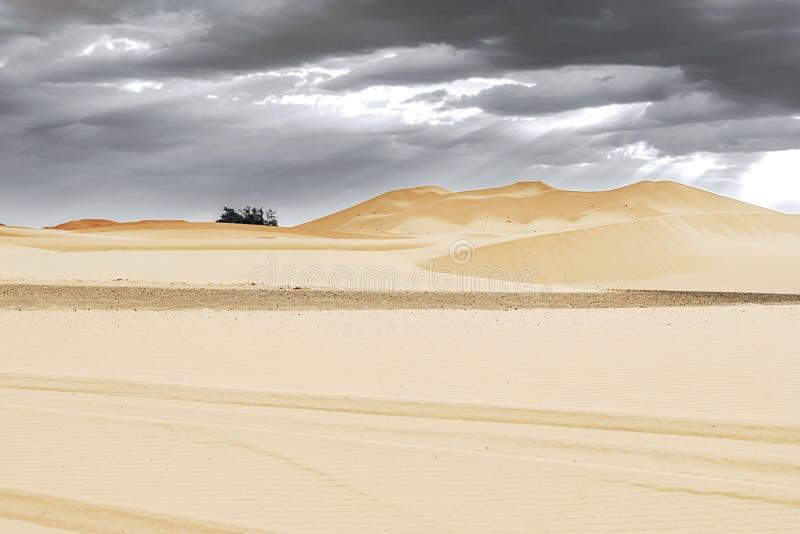Αμμόλοφοι άμμου και φοίνικας στην έρημο Σαχάρας στοκ φωτογραφίες