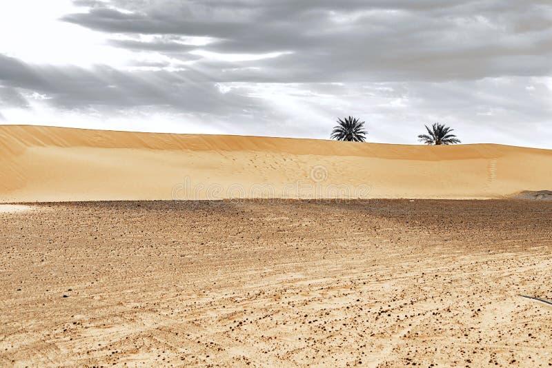 Αμμόλοφοι άμμου και φοίνικας στην έρημο Σαχάρας στοκ εικόνα
