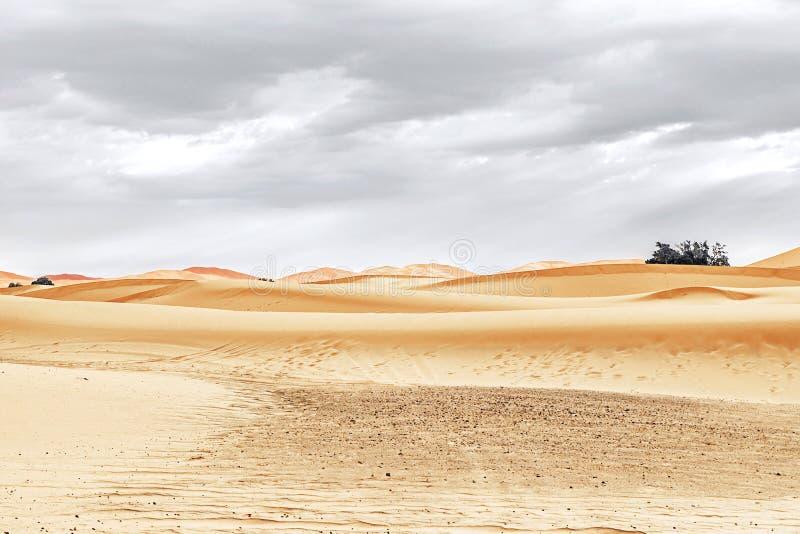 Αμμόλοφοι άμμου και φοίνικας στην έρημο Σαχάρας στοκ φωτογραφία με δικαίωμα ελεύθερης χρήσης