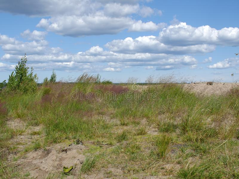Αμμόλοφοι άμμου που εισβάλλονται με τη χλόη στοκ εικόνες