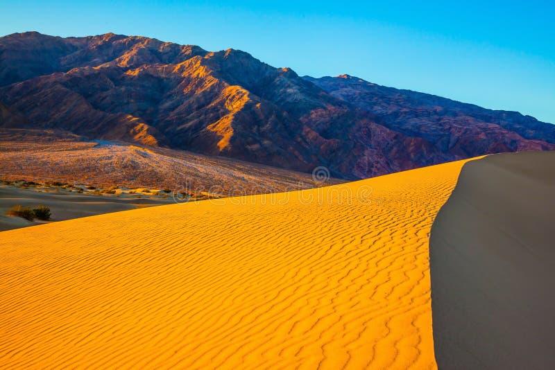 Αμμόλοφοι σε Καλιφόρνια στοκ φωτογραφίες